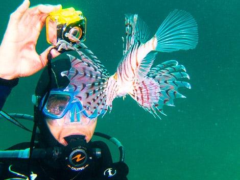 Mergulho para brasileiros no japao da coral