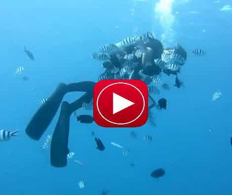 Vídeo De Mergulho Em Okinawa