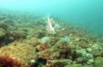 Curso de mergulho básico Open Water Diver do Ricardo Gondo (Febem)