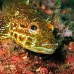 Papel de Parede - Mergulho no Japão - Coral Diving-11