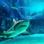 Papel de Parede - Mergulho no Japão - Coral Diving-15
