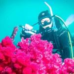 Papel de Parede - Mergulho no Japão - Coral Diving-3