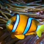 Papel de Parede - Mergulho no Japão - Coral Diving-9